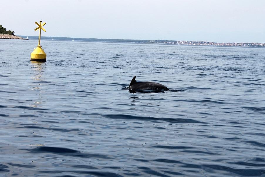 la présence tant appriéciée de nos amis les dauphins